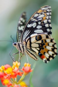 Butterfly__Biomimicry_sustainable_product_design_live_creative_studio_blog