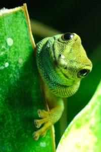 gecko_biomimicry_LIve_creative_studio_blog