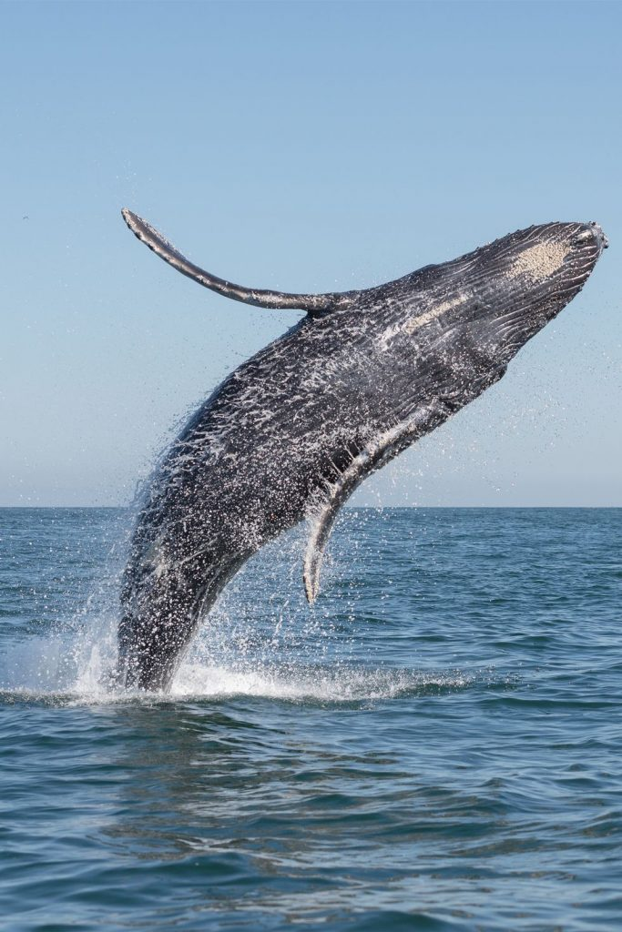whale_biomimicry_blog/