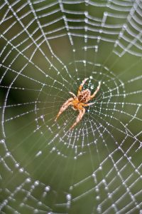 Spider_web_biomimicry_live_creative_studio_blog