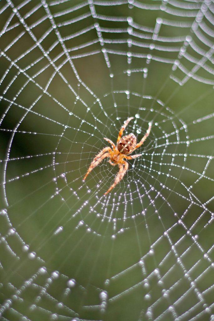 Spider_web_biomimicry_blog