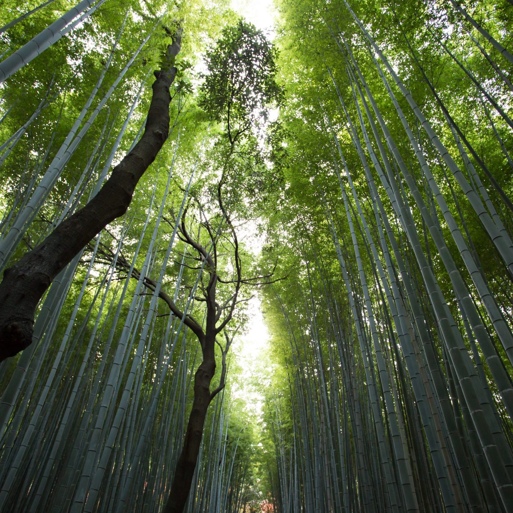 forest_carbon_sequestration_sustainable_design_innovation_live_creative_studio_blog